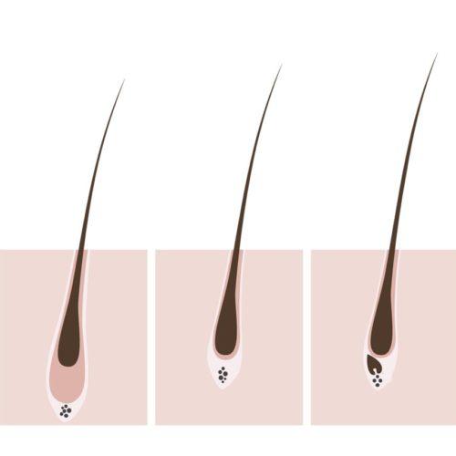 Las 3 fases del crecimiento del pelo